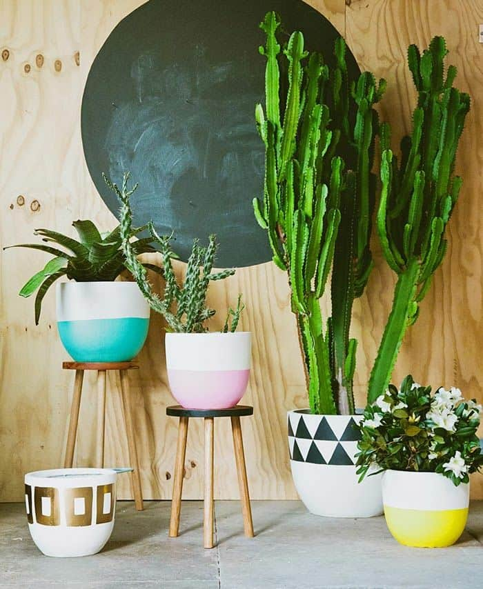 Beautiful room plants colorful pots creative decoration ideas