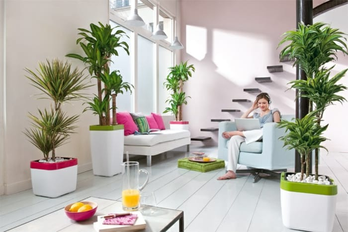 Feng-shui plant living ideas indoor plants Palms types modern minimalist