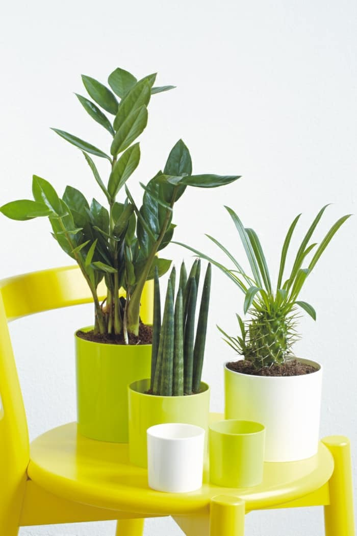 Modern plant pots Indoor Garden Feng shui dining room ideas