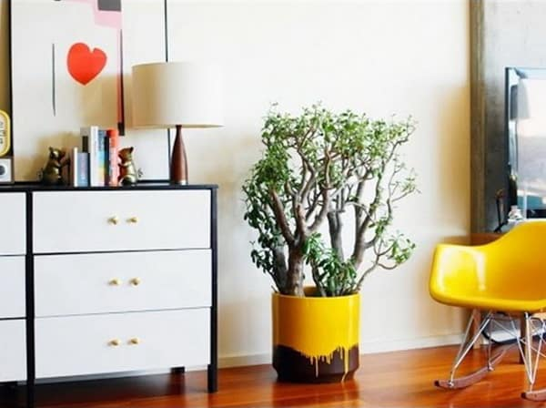 Wonderful Ideas for Decorating with Indoor Plants