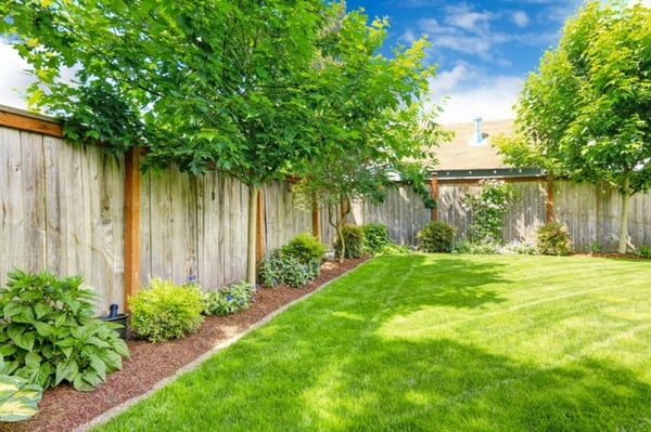 Trees for the Garden - Tips & Ideas for Large and Small Outdoor Areas