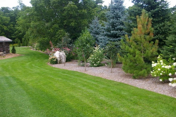 Garden Trees For Large And Small Outdoor Areas 7